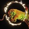 Цирки в Клинцах