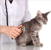 Ветеринарные клиники в Клинцах